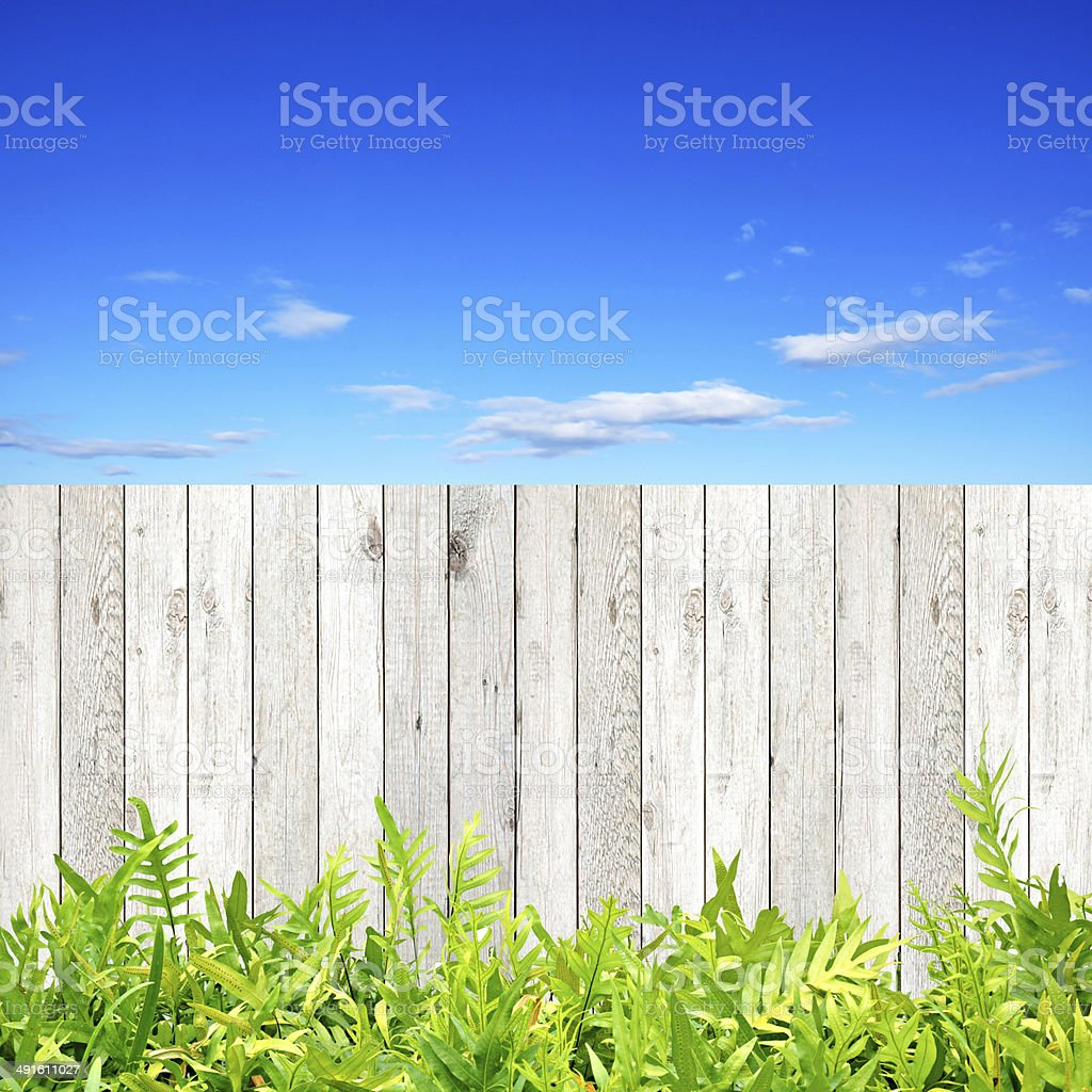 Wooden fence and green fern leaves on blue sky background stock photo