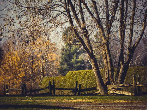 A wooden fence crossing a tree. stock photo