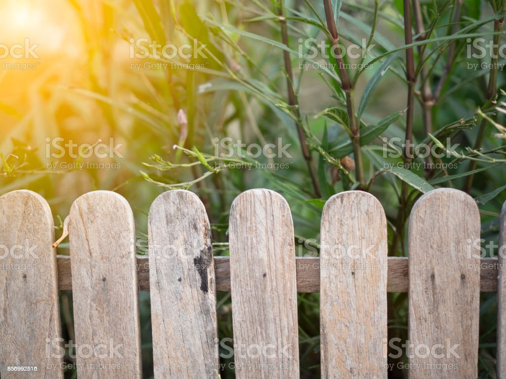 wooden fence in garden with flower stock photo
