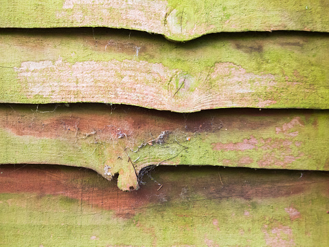 Close up of a mouldy larch lap wooden fence panel. Rustic background, wallpaper concept.