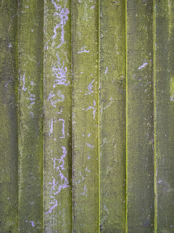 Close up of a green mouldy wooden fence panel. Rustic background, wallpaper concept.