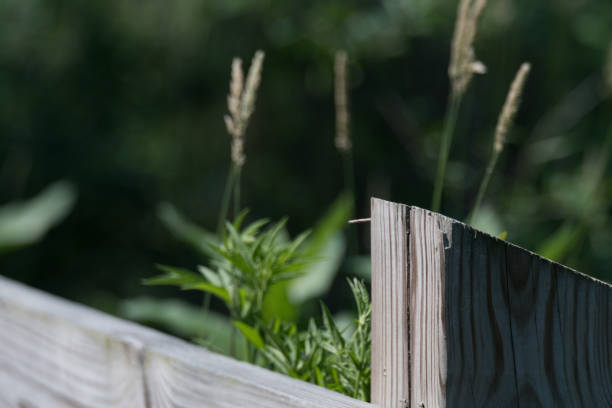 Wooden fence post near a pond with focus on fence post stock photo