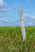 istock Wooden fence posts with barbed wire 1167131688