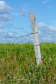 istock Wooden fence posts with barbed wire 1167131781