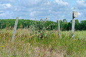 istock Wooden fence posts with barbed wire 1167131818