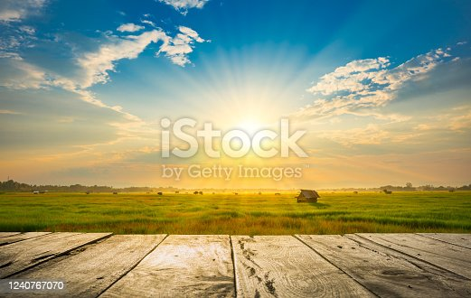 istock wooden floor beside green rice field in the morning with sunray 1240767070