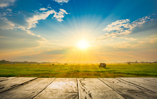 old wooden floor beside green rice field in the morning with sunray