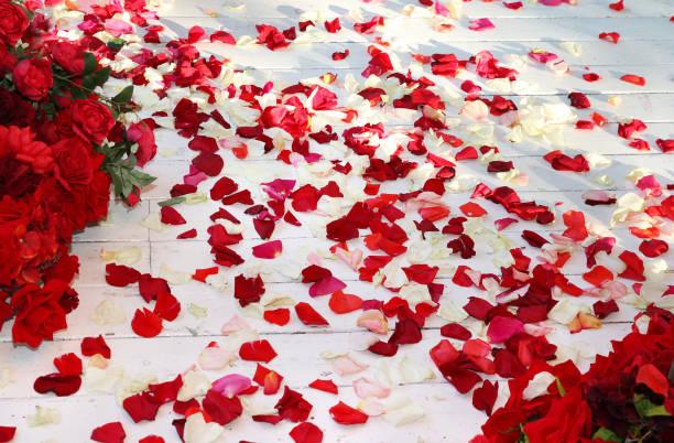Wooden floor strewn with rose petals picture id1124705310?b=1&k=6&m=1124705310&s=612x612&w=0&h=psusmlwy132g rjmfpjpnxy0ejisxhsqgvpawlu6nms=