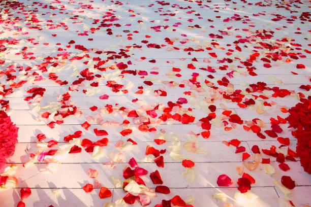 Wooden floor strewn with rose petals picture id1124705337?b=1&k=6&m=1124705337&s=612x612&w=0&h=5naai4gawz5avl2r48reoxneccpq7horedoezxid kw=