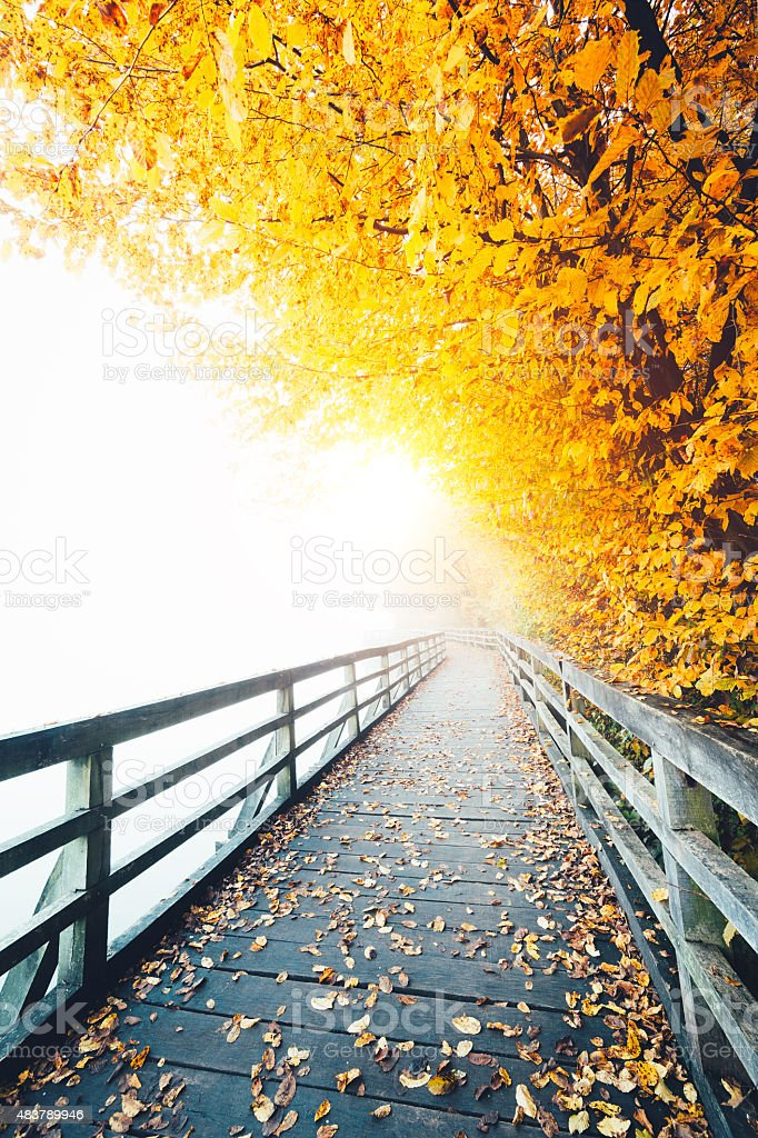Wooden Foggy Path Along The Lake In Autumn stock photo
