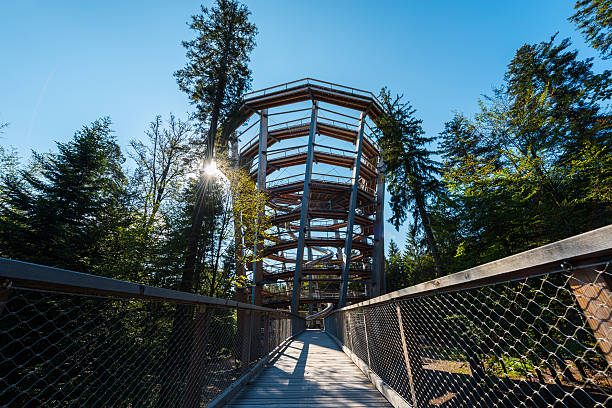 wooden footbridge and lookout in forest - baumwipfelpfad stock-fotos und bilder