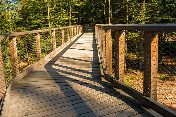 wooden footbridge in forest - baumwipfelpfad stock-fotos und bilder