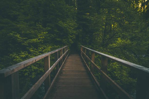 Wooden footbridge on hiking trail in dark lush forest of Oregon stock photo