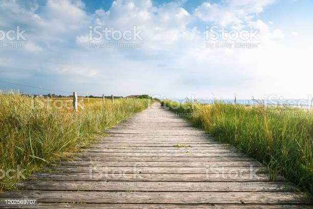Photo of Wooden footpath and high grass in sunlight. Sylt summer landscape