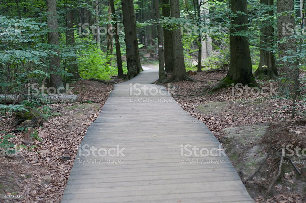 Wooden footpath in the forest stock photo