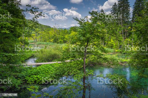 Photo of Wooden footpath leading trough forest and wetlands with lakes in Plitvice Lakes
