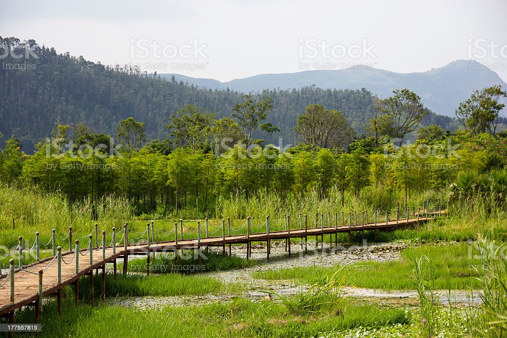 Wooden Footpath Over Wetland stock photo