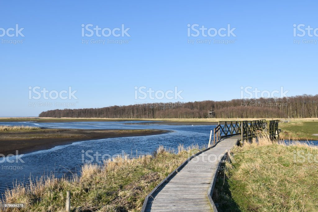 Wooden footpath through a marshland stock photo