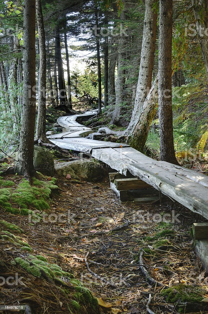 Wooden footpath through the woods stock photo