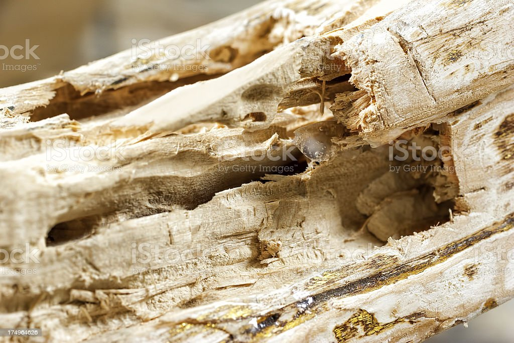 Wooden furniture eaten by termites stock photo