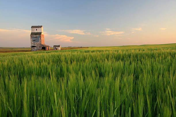 Wooden Grain Elevator on the Prairie stock photo