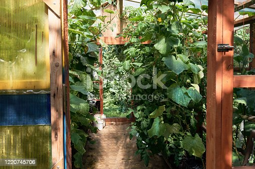 Photo of beautiful wooden greenhouse with a lot of tomato plants. Greenery interior. Large bright orangery with glass walls, windows and place for growing green vegetables, inner view.