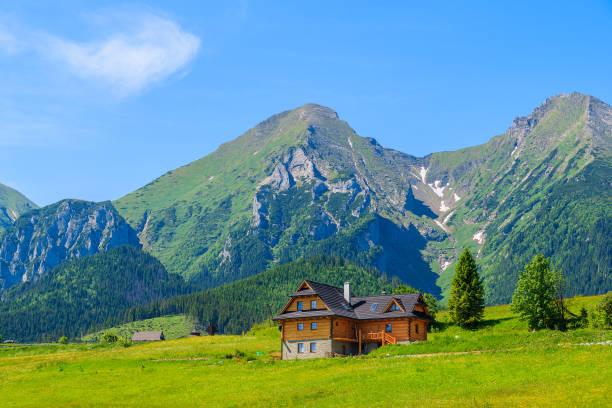 여름 슬로바키아에에서 백그라운드에서 트리 bielskie 산 녹색 풀밭에 목조 주택 - 카르파티아 산맥 뉴스 사진 이미지