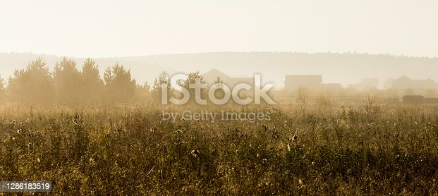 Wooden houses on the edge of the forest. Grass and trees near the village.