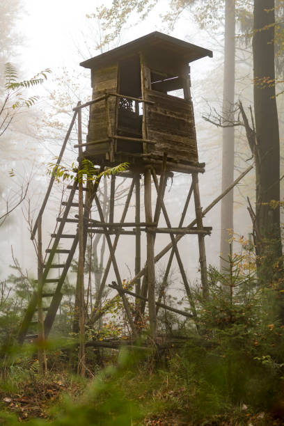 Wooden hunter perched at the forest edge in fog in autumnal pine forest Wooden hunter perched at the forest edge in fog in autumnal pine forest against blurred background high seat stock pictures, royalty-free photos & images