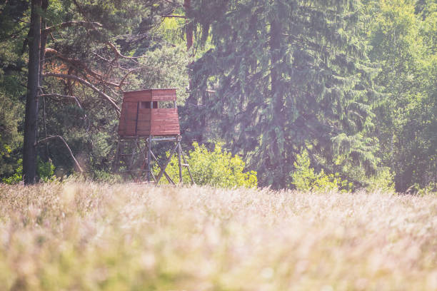 wooden hunting blind on the edge of the forest, near the meadow stock photo