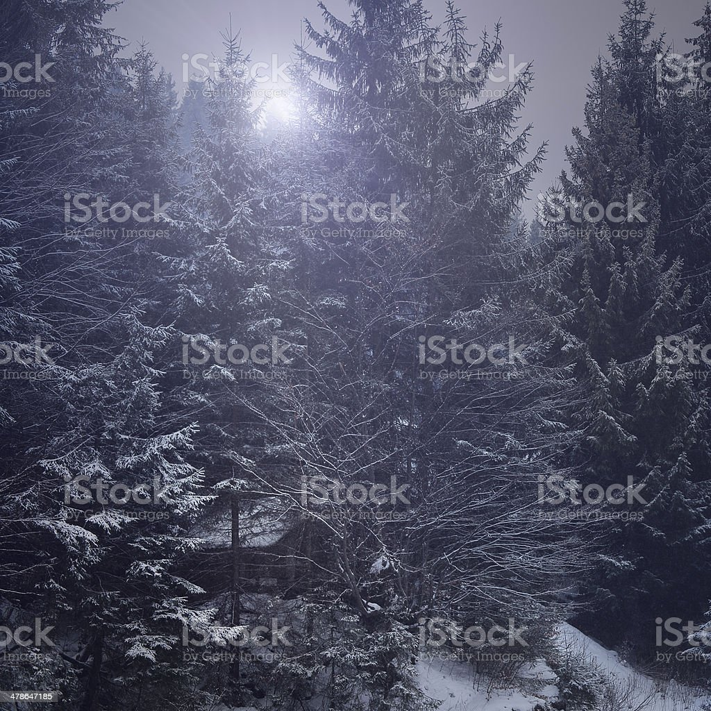 Wooden hut in winter forest. royalty-free stock photo