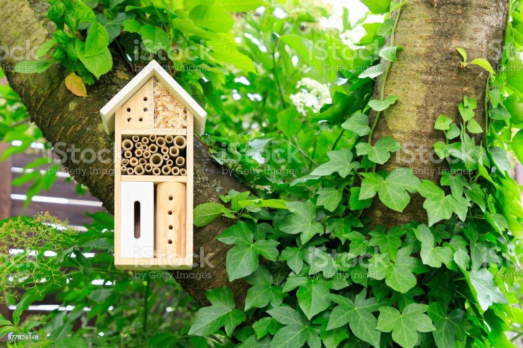 Un hôtel à insectes en bois dans l'arborescence - Photo
