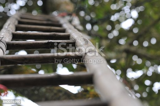 Wooden ladder lean against tall tree and bokeh background of tree leaves.