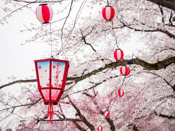 Wooden lantern next to branch of Sakura tree, Nagoya, Japan stock photo