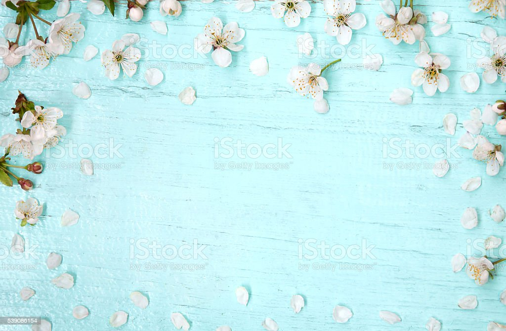 Wooden Light Blue Background Decorated With Cherry Flowers
