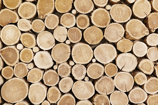 Wooden log texture