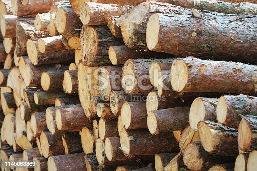 Wooden logs of pine woods in the forest, stacked in a pile by the side of the road. Freshly chopped tree logs stacked up on top of each other in a pile.