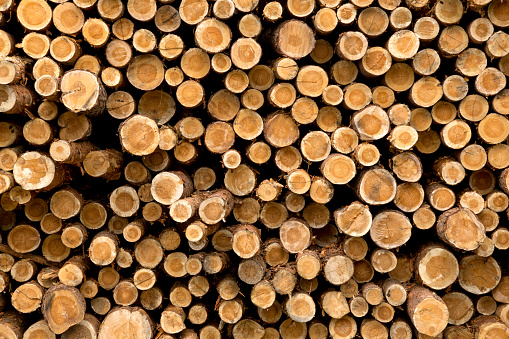 Wooden Logs. Trunks of trees stacked close-up.