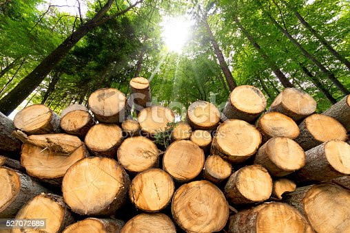 istock Wooden Logs with Forest on Background 527072689