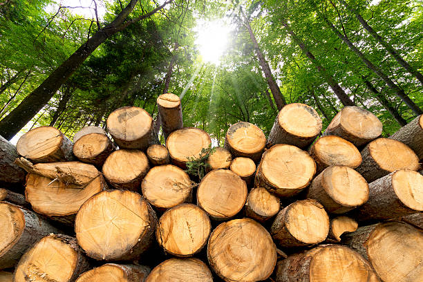 Wooden Logs with Forest on Background Trunks of trees cut and stacked in the foreground, green forest in the background with sun rays log stock pictures, royalty-free photos & images