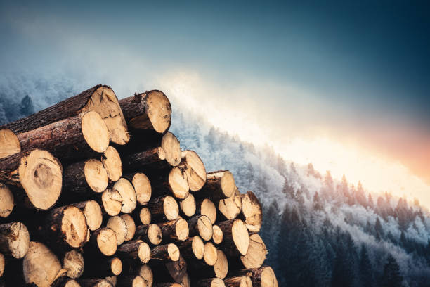 Wooden Logs With Pine Forest In The Background Winter landscape with wooden logs. log stock pictures, royalty-free photos & images