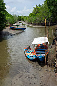 Wooden long tail fishing boats on the riverbed with green mangrove forest in the background.