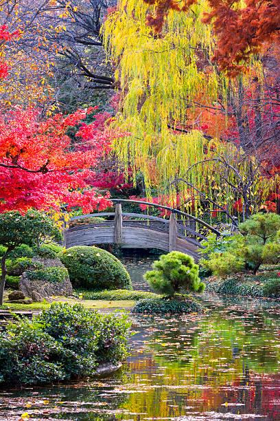 mond-brücke in den japanischen gärten - japanischer garten stock-fotos und bilder
