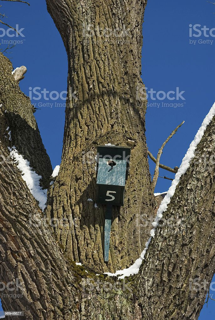 Wooden nesting box on the old oak tree royalty-free stock photo