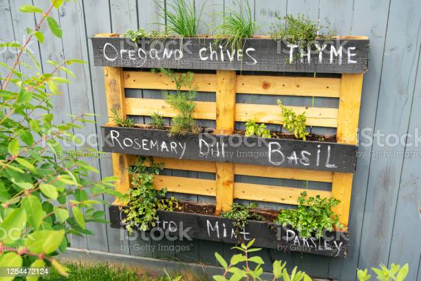 Photo of Wooden pallet creative idea for making stylish garden hanging planter for herbs or vegetables. Wall mounted planter