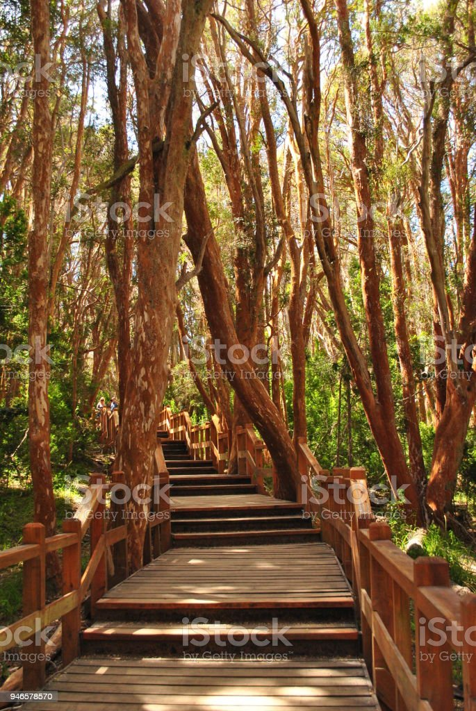 Wooden path for tourists in Arrayanes National Park, Villa la Angostura, Patagonia Argentina stock photo
