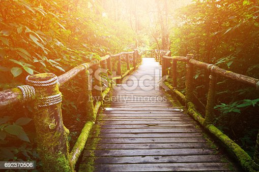 Wooden path in forest.