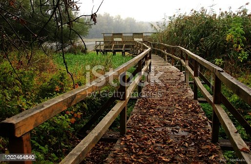 Detail of wooden path in Hungarian forest.