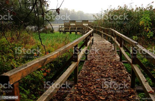 Photo of Wooden path in Hungarian forest.
