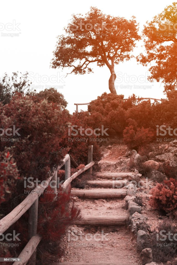 Wooden path in the autumn woods royalty-free stock photo